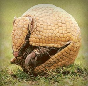 Futbol Seleccion - La mascota de Brasil 2014 - Armadillo